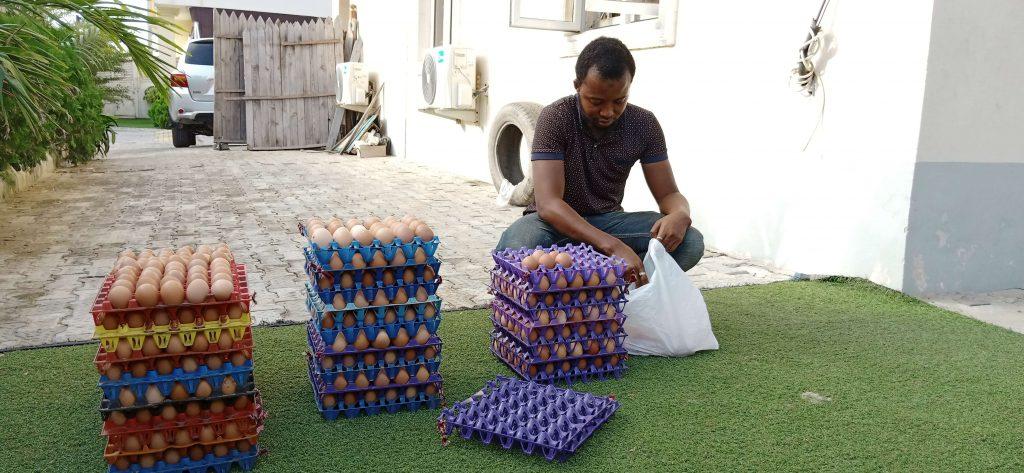 Kola's egg factory Lagos